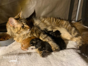 norma-chatons-1